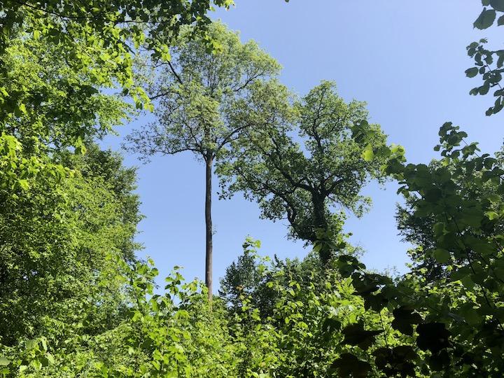 Découverte de l'Ill et de la forêt voisine